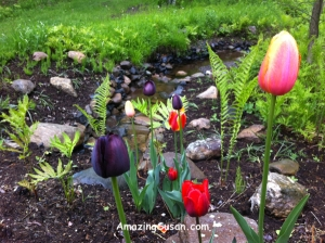 Tulips from my morning walk because I forgot to take a pic of the gazpacho